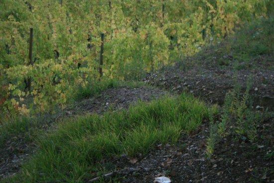 La Loggetta : Chianti Classico wine harvest produced by the owners