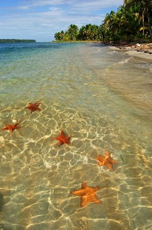 Bocas Inn: From our hotel you can book great excursions in the area such as to Starfish Bay