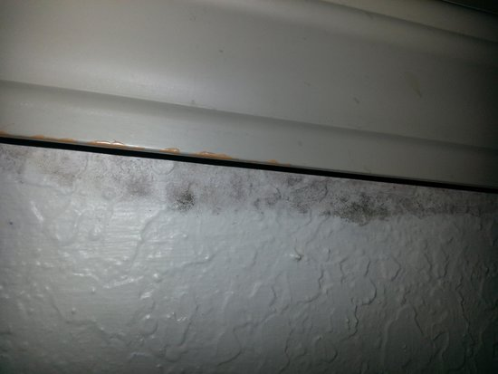 Beach House, A Holiday Inn Resort: mold in room