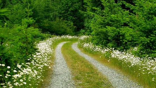 Beautiful long driveway lined with wildflowers