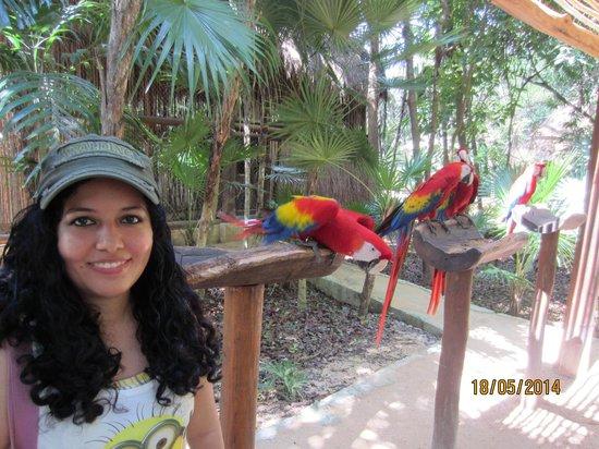 Parque Xcaret: AVIARIO