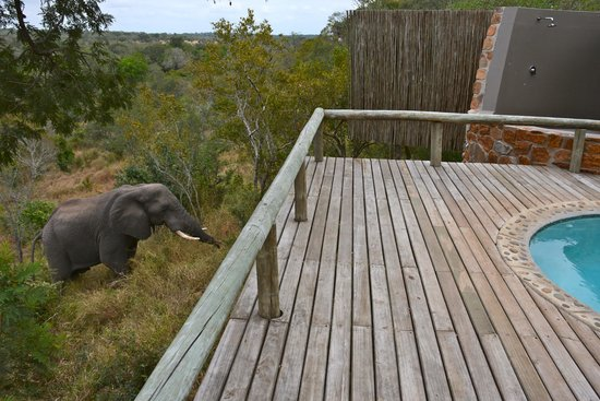 Leopard Hills Private Game Reserve : An elephant visits.