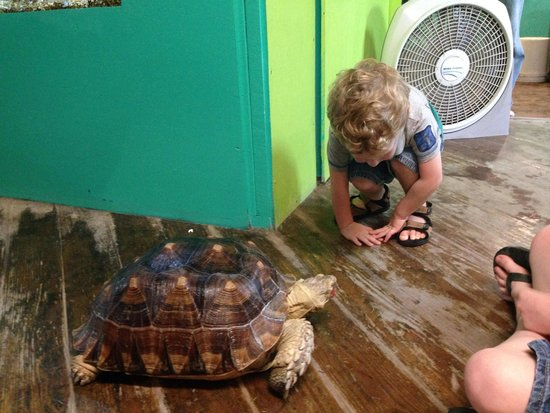 South Padre Island Dolphin Research & Sea Life Nature Center: Touring with the tortoise