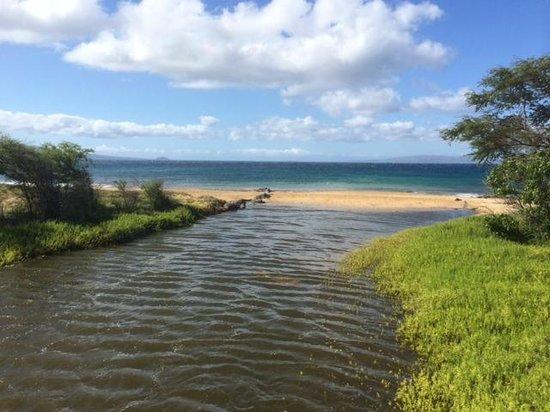 Kealia Pond National Wildlife Refuge: View of the ocean