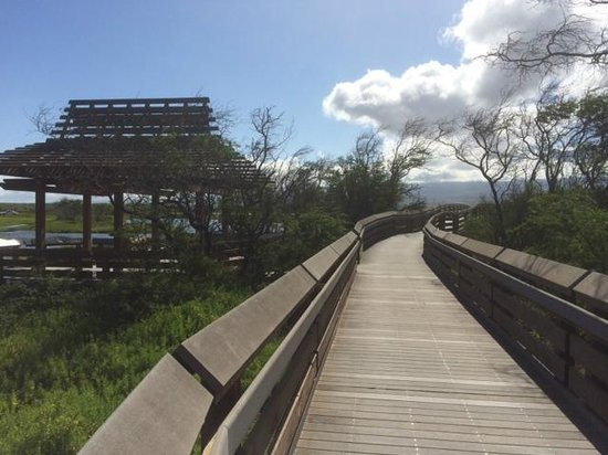 Kealia Pond National Wildlife Refuge: Boardwalk