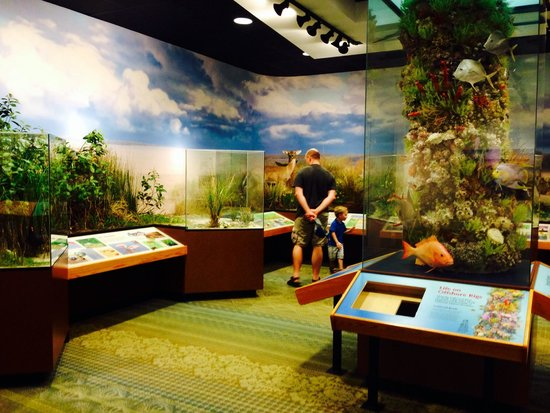 South Padre Island Birding and Nature Center: 2nd floor educational center