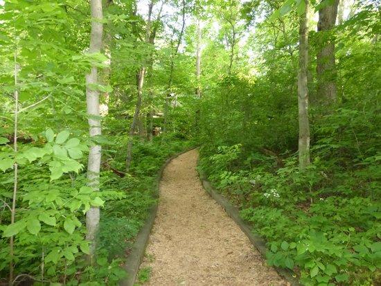 Eloise Butler Wildflower Garden and Bird Sanctuary: Narrow walking trail (img 1)