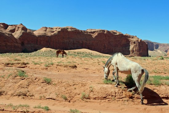 Navajo Spirit Tours - Day Tours: Monument Valley