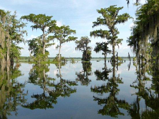 Cajun Country Swamp Tours: Swamps