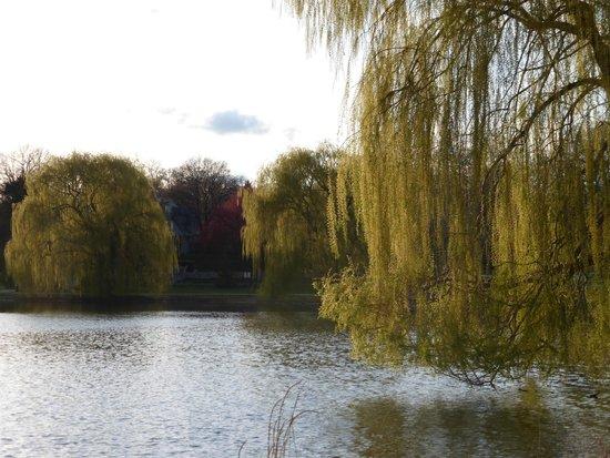 Lake of the Isles: Trees at the edge
