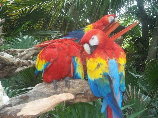 Parque Xcaret: atractivos