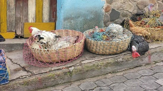 ChiChi Market: selling poultry