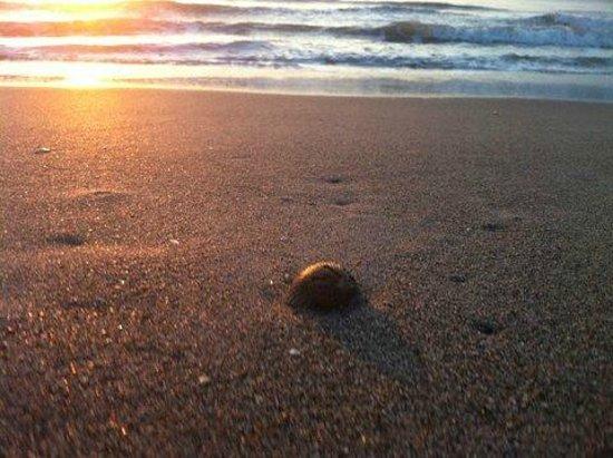 Beach Island Resort: The beautiful beach 2