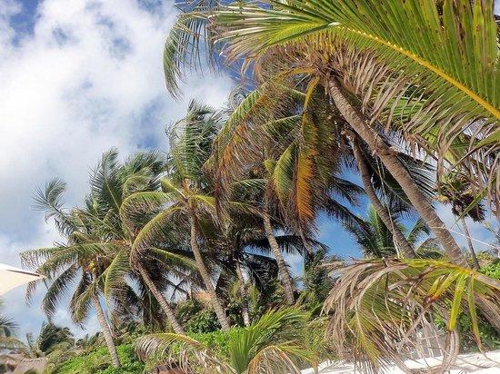 Cabanas La Luna : Beach 4