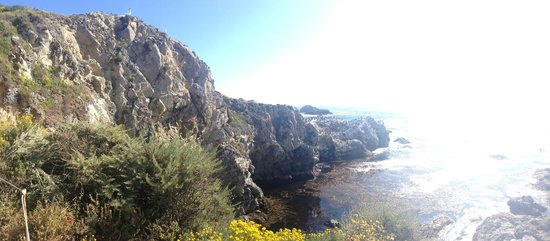 Point Lobos: Carmel, CA