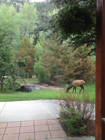 Estes Park Condos: morning visitor