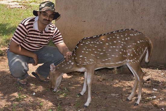 Bannerghatta Nature Camp: This domesticated inside the JLR Camp Chital is very friendly