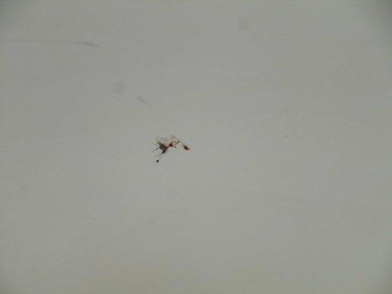 All'Angelo Hotel: Zanzara schiacciata sul muro da un cliente precedente