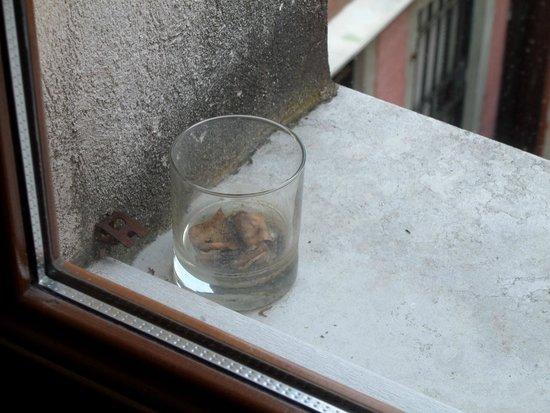 All'Angelo Hotel: sigarette spente strovate fuori la finesra