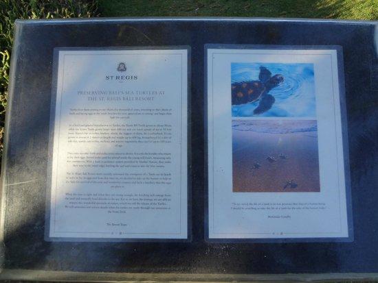 The St. Regis Bali Resort : Turtle Conservation