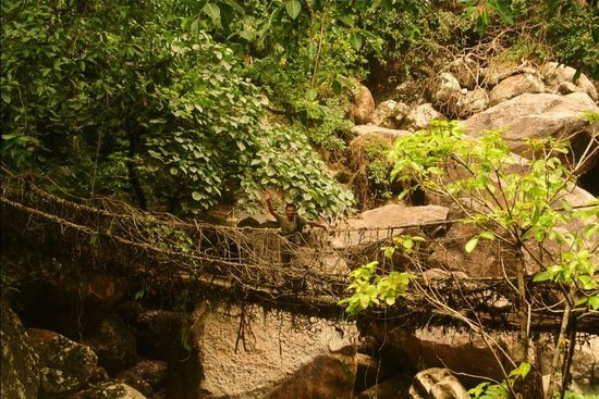 Cherrapunjee, Indien: Living Root Bridge