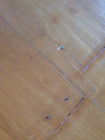 Panviman Resort - Koh Pha Ngan: Nails sticking out of the floor.. Ouch! Thank God for tetanus shots...
