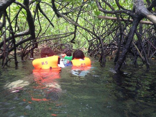 Majika's Island Resort : Mangrove tunnel