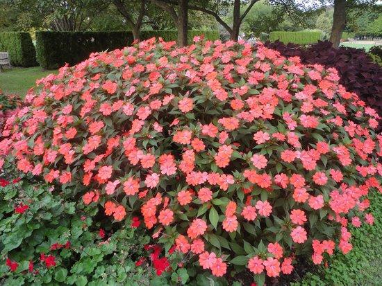 Longwood Gardens: Прекрасное цветение.