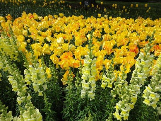 Longwood Gardens: Яркие цветы.