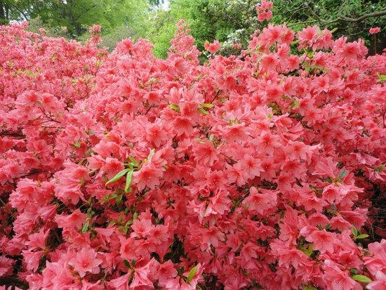 Longwood Gardens: Парад красок.