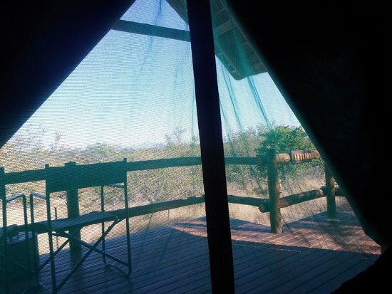 Sausage Tree Safari Camp: View from the Tent Door