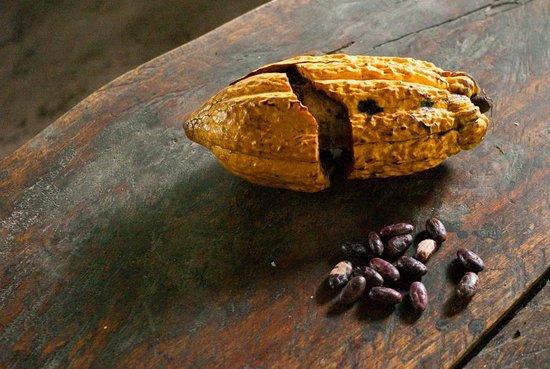 Comunidad Shiripuno : Profitez de votre séjour pour découvrir le cacao national
