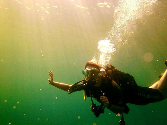 Dawn Diving: Under the sea!