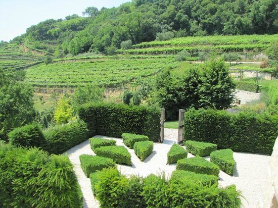 Pianaura Suites-la Torre Tra Le Vigne: Partial view of garden and vineyards from our balcony
