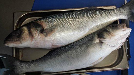 The Elderflower Lymington: 4KG Line Caught Sea Bass