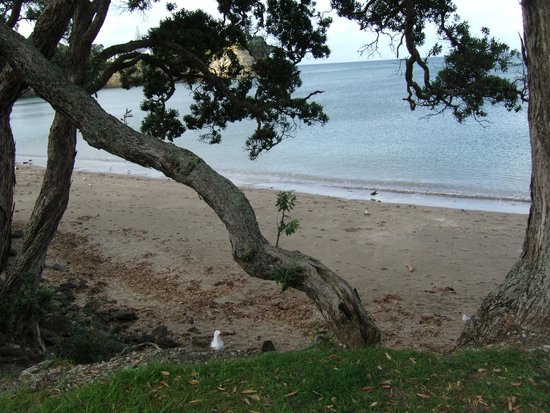Little Manly Beach Picture