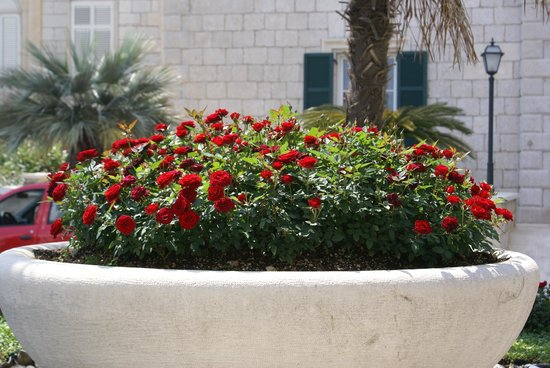 Hilton Imperial Dubrovnik: rose display between hotel and annex