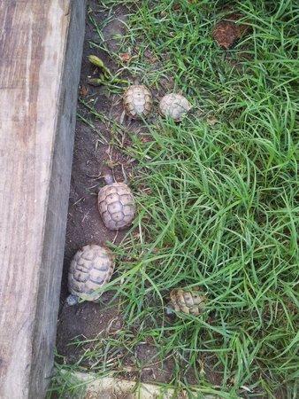 Hotel Kalehan: Les bébés tortue du jardin!