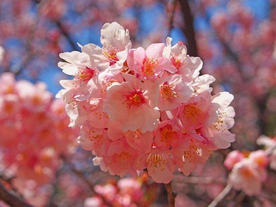 Shinjuku Gyoen National Garden: 桜