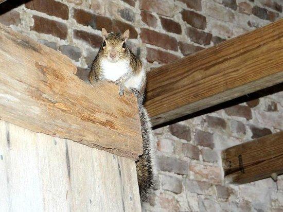 Poplar Grove Plantation: smokehouse squirrel