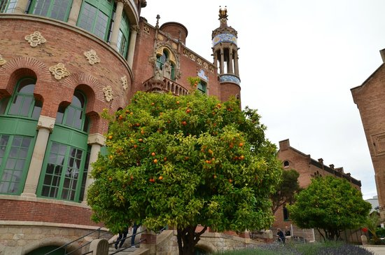 Recinte Modernista de Sant Pau: Orange trees in the garden
