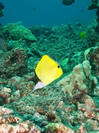 Big Island Divers : Lot's of these