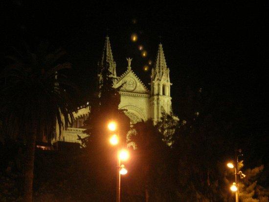 Palma Aquarium : Cattedrale di palma
