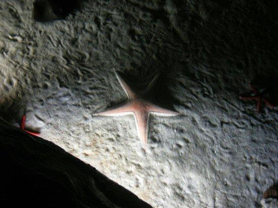 Palma Aquarium : Stella