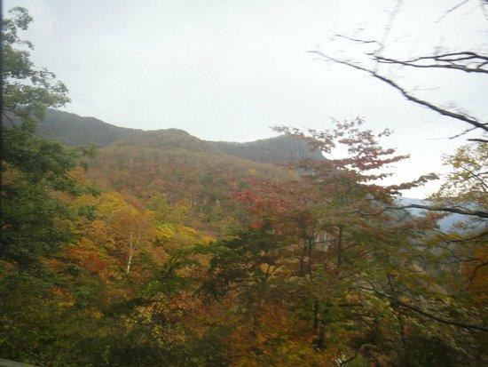 Irohazaka Route : 少し色づいてます。