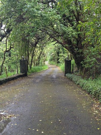 Mallmore Country House: Road in