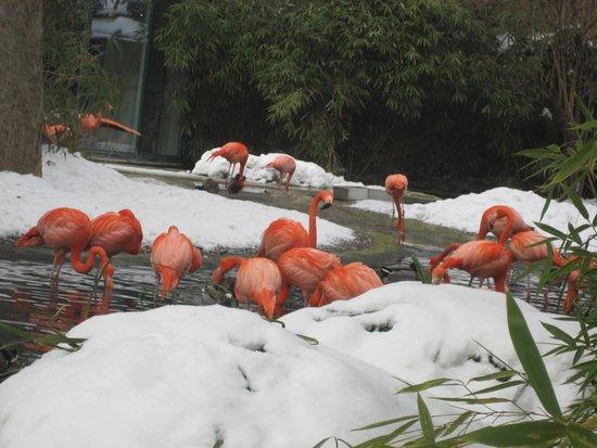 Tiergarten Schönbrunn - Zoo Vienna: Мерзнут, бедолаги!