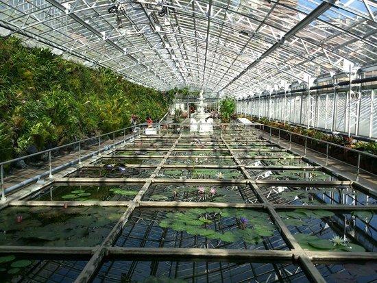 Atagawa Tropical & Alligator Garden : いろいろなスイレンが咲いています。
