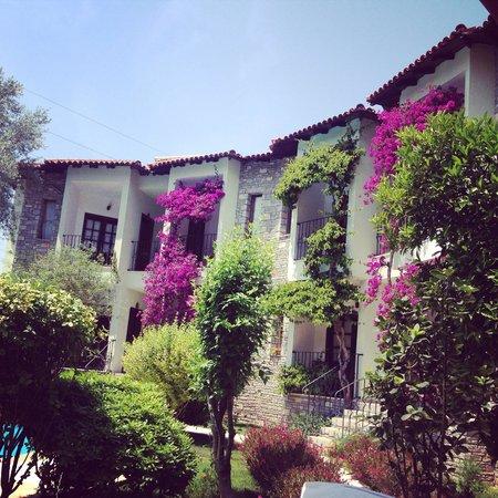 Olive Garden Apart Otel: Olive garden