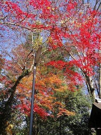 Kiryu Tenmangu Shrine: もみじも見事